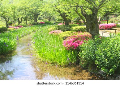 Blooming Irises, Azaleas, green trees, small river stream in Kenrokuen (Kenroku-en) gardens, Kanazawa, Japan. One of three most beautiful landscape gardens of Japan