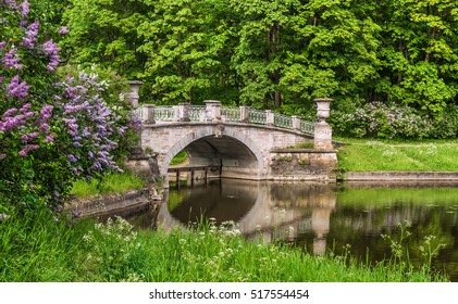 Blooming lilac against Visconti Bridge in Pavlovsk Park near Saint Petersburg, Russia