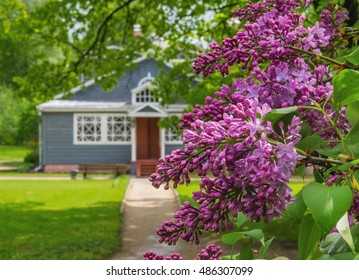 """Blooming lilac in  museum-reserve """"Muranovo"""" named after F.I.Tyutchev. Moscow region, Russia"""