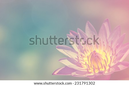 Blooming lotus flower that beautiful peace stock photo edit now blooming lotus flower that beautiful and peace mightylinksfo