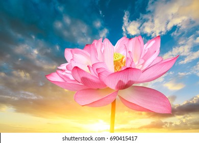 Blooming lotus and sky natural landscape