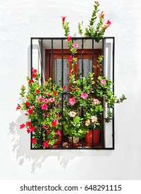 Blooming mallows decorating the window of a white house. Frigiliana, Andalusia, Spain.
