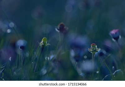 Blooming meadow with field flowers and selective focus. - Shutterstock ID 1715134066