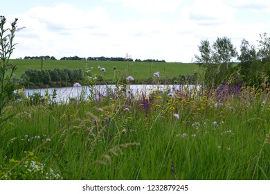 Blooming meadow grasses by the river on summe