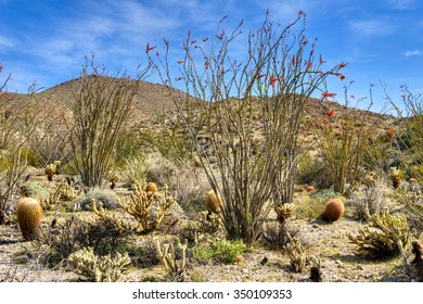 Blooming Mojave Desert in South California.