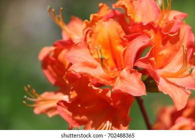 Blooming Orange Plant