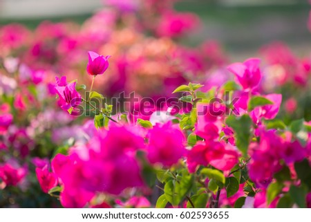 Blooming Paper Flowers Stock Photo Edit Now 602593655 Shutterstock