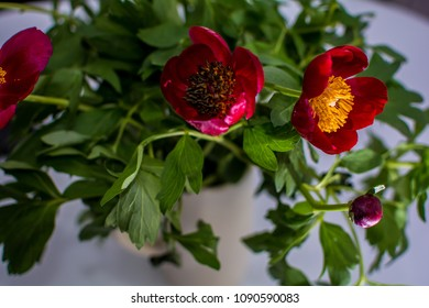 Blooming peonies on the table
