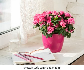 blooming pink azalea in pink flowerpot notebook, pencils, glass of water white rustic background