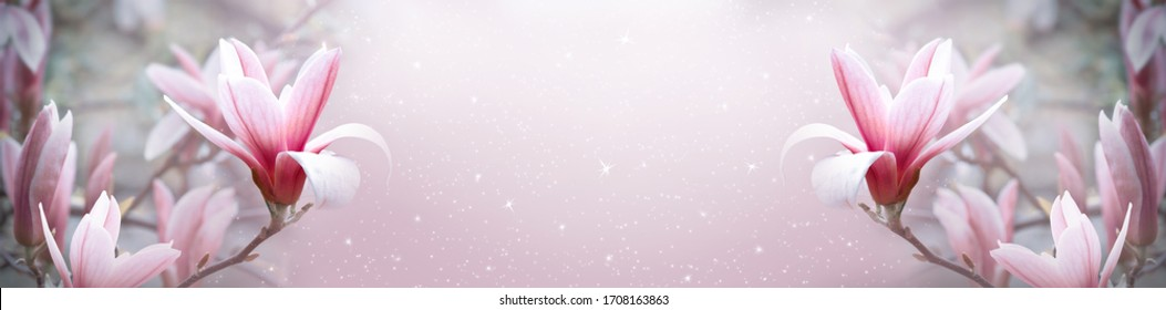 Blooming pink magnolia flowers on fantasy mysterious spring background with shining glowing stars, fabulous fairy tale floral wide panoramic banner with copy space