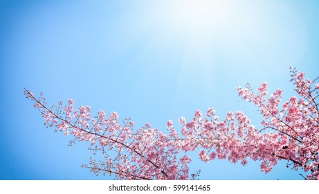 Blooming pink tree against the blue sky. Natural floral background and texture