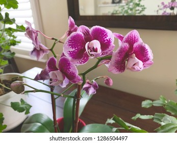 Blooming purple orchids.