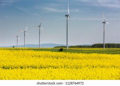 Blooming rapeseed field with wind turbines in Eastern Germany