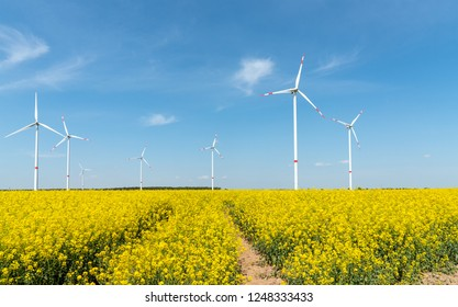 Blooming rapeseed field with wind turbines in the back seen in Germany