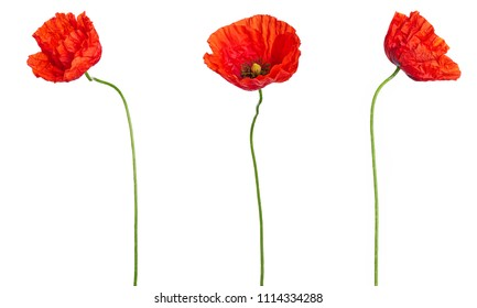 Blooming red poppies Isolated on white background. Floral bouquet bunches design for decor or holiday greetings template.Anzac Day icons of red poppy flowers for 25 April