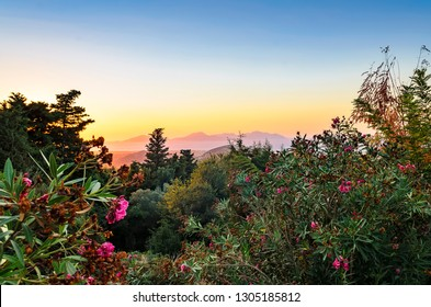 Blooming rhododendron, sunset on the island of Kos, view of the Aegean Sea and the Greek islands of Kalymnos and Pserimos. Greece