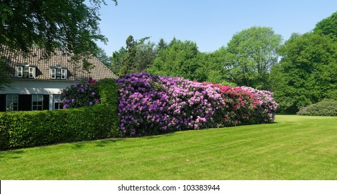 blooming rhododendrons surrounding a house in a park