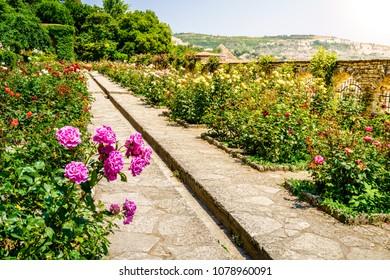 Blooming roses in botanical garden in Balchik, Bulgaria