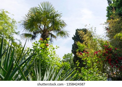 Blooming roses, palm and yucca in the garden