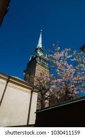 blooming sakura in stocholm
