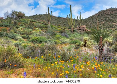 Blooming Sonoran Desert with Saguaros. HDR composition.