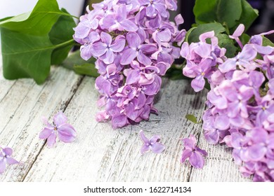blooming spring lilac flowers on a white wooden background. With copyspace