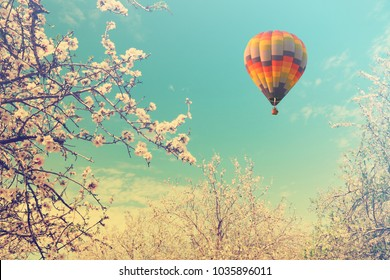 Blooming spring orchard. Flowering branches of almond trees with fluffy white and pink flowers. Springtime garden. Hot air balloon flying in the sky. Warm toned colors