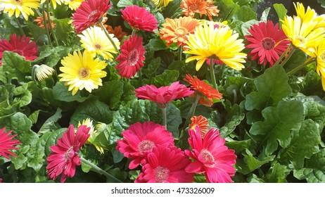 Blooming Summer Flowers