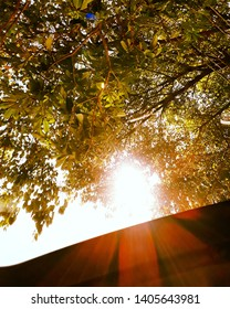Blooming sun - It seems as if the sun is blooming out of the tree like a flower as observed from a car's sunroof in the forest.