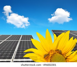 Blooming sunflower in the background solar panels. Green energy concept.