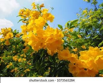 Trumpet Vine Images Stock Photos Vectors Shutterstock