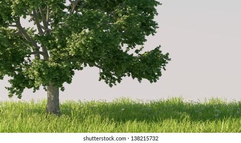 Blooming tree in flower meadow
