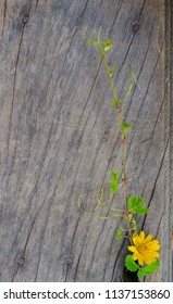 The blooming tree grows in the crevices of old wood.