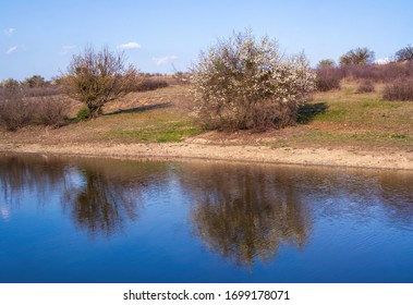 Blooming tree, lake and sky. Landscape photo