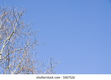 Blooming Trees on a Blue Sky
