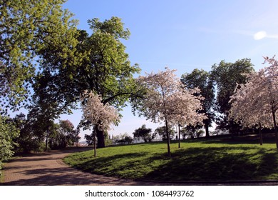 blooming trees in prague in czech republic in spring