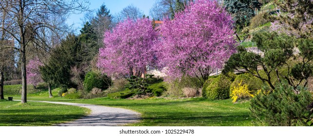 blooming trees in spring