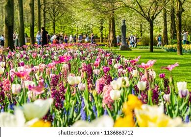 Blooming tulips flowerbeds in Keukenhof flower garden, Netherlands