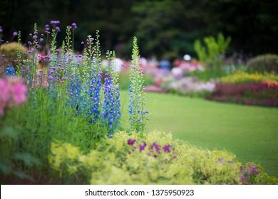 Blooming vitex flower