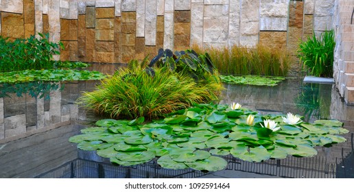 Blooming water lilly near a wall