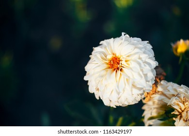 Time Lapse Flowers Blooming Stock Photos, Images