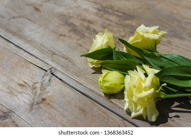 Blooming White yellow Eustoma, Lisianthus Flowers