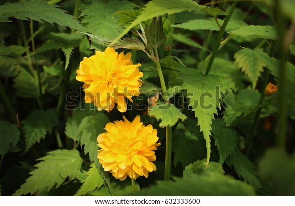 Blooming yellow flower on green background