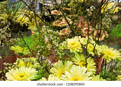 Yellow flower with red center images stock photos vectors blooming yellow and red flowers with the dark black center arrangement in the garden beautiful mightylinksfo