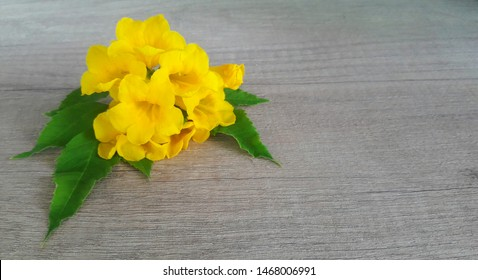 Blooming yellow trumpet flowers, yellow elder or Thai name call Thong-Urai on light brown wood table with blur fade tone in background.