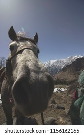 A blooper by a Mare while climbing the Snowy Mountains. A still from Manali, India.
