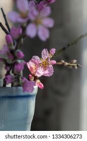 Blossom almond tree