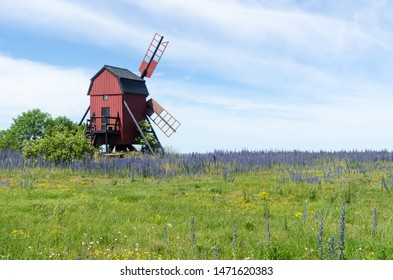 Blossom blueweed flowers by an old wooden windmill at the island Oland in Sweden