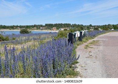 Blossom blueweed flowers by a roadside with mailboxes at the swedish countryside on the island Oland