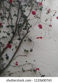 Blossom flowers on white wall background